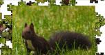 Jigsaw: Dark Squirrel
